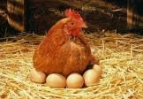 """Vajíčka z domáceho voľného výbehu – """" Super Potravina """""""